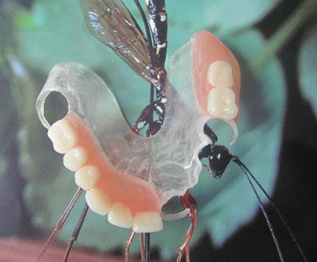 Dentisan SRL poza 4
